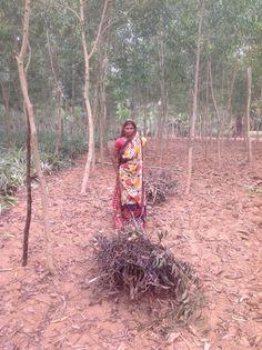 Women collecting sticks