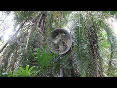 Jurassic Park Hidden Trail - ABANDONED Triceratops Encounter
