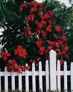 picket fence dreams