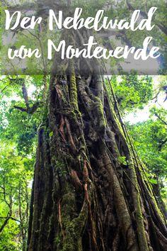 Der Nebelwald von Monteverde