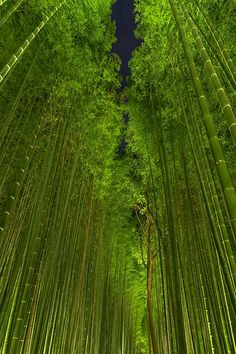 Beautiful Bamboo Forest by night, Arashiyama, Kyoto, Japan photo on Sunsurfer Bonsai, Palette Verte, Beautiful World, Beautiful Places, Night Forest, Tree Forest, Dark Forest, All Nature, Foto Art