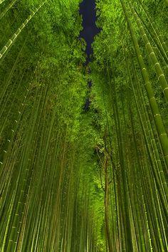 Bamboo forest by night - Arashiyama, Kyoto, Japan