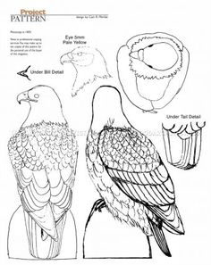 #912 Bald Eagle Carving - Wood Carving Patterns - Wood Carving Patterns and Techniques