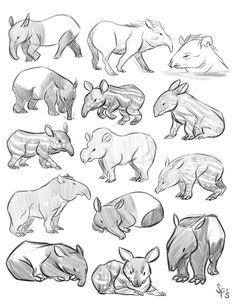 Animal Studies: Tapir by Tigerhawk01 on DeviantArt ★ || CHARACTER DESIGN REFERENCES (https://www.facebook.com/CharacterDesignReferences & https://www.pinterest.com/characterdesigh) • Love Character Design? Join the #CDChallenge  (link→ https://www.facebook.com/groups/CharacterDesignChallenge) Promote your art in a community of over 40.000 artists! || ★