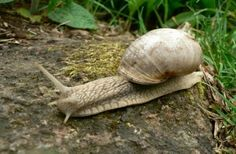 Snails Taking it Slow and Easy VI | Discovery News