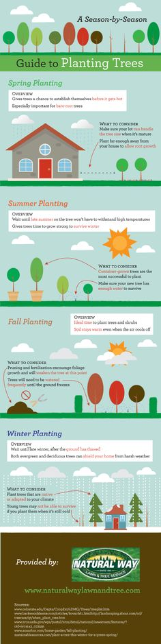 How to Plant a Tree in Spring, Summer, Fall and Winter