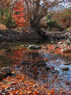 Fall leaves on Cave Creek near the house by michelanious, via Flickr