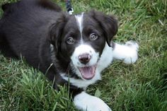 My super sweet dog Georgia at just a few months old.  She was adorable.  Ok, she's still pretty cute.