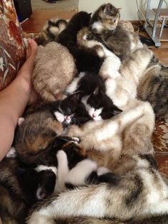 Cuddly blanket of kittens