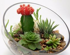 Succulent Terrarium with Moss and River by BlissGardensBoutique