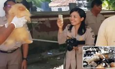 Welcome to Bali! Brutal culling of dogs in Bali Martin Luther King Jnr, Free Planet, Stop Animal Cruelty, Dog Fighting, Puppy Mills, Dog Eating, Five Star, Together We Can, Animal Rights