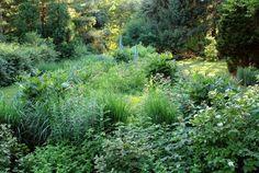 no till gardening - Google Search