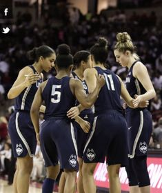Uconn Womens Basketball, Basketball Mom, Basketball Quotes, Basketball Pictures, University Of Connecticut, Things That Bounce, Wetsuit, Dream Job, Baddie