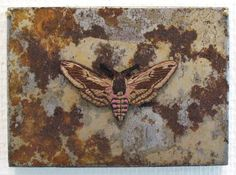 Ulla Pohjola Fabric Manipulation, Textile Art, Fiber Art, Moth, Insects, Textiles, Bees, Animals, Lace