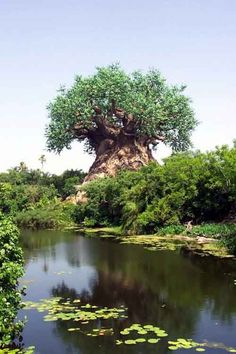 This a tree on the Limpopo River in Africa. This is a real tree and there are ten of. Tree on the Limpopo River Baobab Tree, Tree Carving, Nature Tree, Tree Forest, Tree Art, Tree Of Life, Beautiful World, Wonders Of The World, Scenery