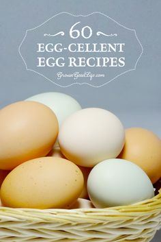 Over 60 Egg-Cellent Egg Recipe Collection from Real Food Bloggers | Grow a Good Life