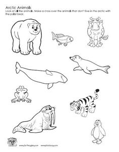 tundra animals coloring pages.html