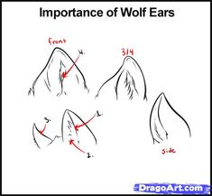 How to Draw Wolves, Step by Step, forest animals, Animals, FREE ...