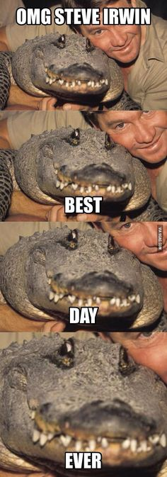 We compile the great collection of Top 30 steve irwin memes. Steve Irwin memes are viral right now on social media and internet. Funny Animal Jokes, Cute Funny Animals, Funny Animal Pictures, Animal Memes, Funny Photos, Funny Images, Funny Adult Jokes, Really Funny Memes, Stupid Funny Memes