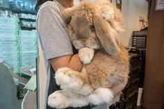 Any experience keeping Flemish giant hare or giant Belgian Hare? I'm thinking about getting one next summer and I'm looking for care tips etc Giant Bunny, Big Bunny, Cute Baby Bunnies, Big Animals, Cute Baby Animals, Animals And Pets, Funny Animals, Giant Animals, Flemish Giant Rabbit
