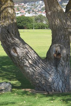 Trees and art Trees, Plants, Photography, Art, Art Background, Photograph, Tree Structure, Photography Business, Flora