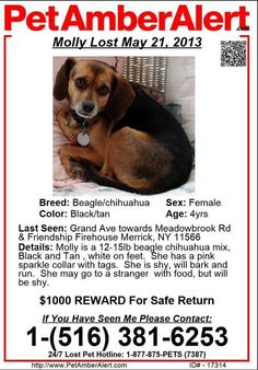 LOST DOG - Merrick, NY (Long Island)  Molly is still missing. Please like and share this page so we can get Molly home to her heartbroken family https://www.facebook.com/mollycomehome