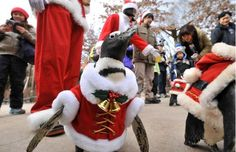 March of the Santa Claus penguins at Everland in South Korea…I wanna go!!!