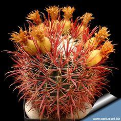 Ferocactus acanthoides