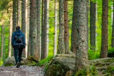 Mountain Forest Hiking by duallogic. Caucasian Men with Small Backpack on the Forest Trail. Forest Trail, Forest Mountain, The Camino, Travel Agency, Designs To Draw, Hiking, Tours, Small Backpack, Social Networks