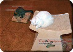 Игрушка для котика, cat toy, faunny cat, cat house, for cat, 貓玩具,貓,貓屋,貓