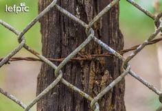 • Trabalho Manual - Para proteger um jardim é essencial a construção de uma cerca. Além de delimitar o espaço reservado, mantém pessoas e animais indesejados fora do alcance da vegetação. Na foto, temos um cercado feito de arame com colunas de madeira. Ideal para ilustração de trabalhos manuais e/ou jardinagem. 📷 by Leandro Floriano Download da imagem no #Shutterstock: https://shutterstock.com/pic-467632376 #fence #plant #flower #garden #forest #environment #ecology #nature #beauty…