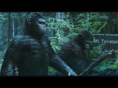 Dawn of the Planet of the Apes: Trailer 2 --  -- http://www.movieweb.com/movie/dawn-of-the-planet-of-the-apes/trailer-2
