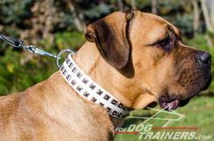Designer Studded White #Leather #Dog #Collar for Walking - $59.90 | www.fordogtrainers.com