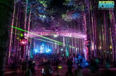 Electric Forest  :-)