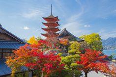 秋の五重塔 (広島県、廿日市市) #Autumn #紅葉 #五重塔