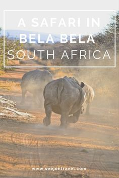 An African safari at Itaga Private Game Lodge in Bela Bela, South Africa. Click through to read the full post!