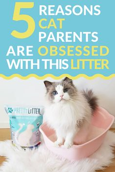 There are 5 major reasons that cat parents want to switch to using Pretty Litter. It keeps tabs on cat health has great odor control lasts longer is cleaner easier gets delivered straight to your door and saves you money. I Love Cats, Cool Cats, Kittens Cutest, Cats And Kittens, Cats Meowing, Siamese Cats, Serval Cats, Ragdoll Cats, Fat Cats