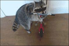 Animales :v - GifsGamers.com