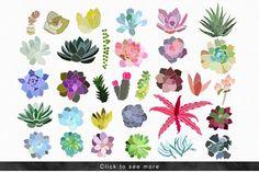 Succulent Paradise - Illustrations