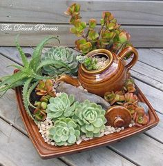 10 Mini Garden Ideas, Most of the Brilliant as well as Beautiful 10 Mini-Garten-Ideen, die meisten b Succulents In Containers, Cacti And Succulents, Planting Succulents, Cactus Plants, Cactus Flower, Air Plants, Mini Cactus Garden, Flowering Plants, Planting Flowers