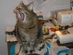 """Love this!! Can we take a nap now??? """"Attack of the sewing table by the Giant Yawning Cat Blob"""""""