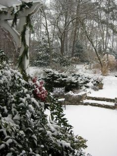 Sally's garden in Maryland, in winter--click through to see more of this garden!