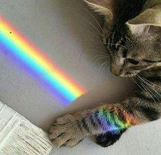 yoυ don'т ĸnow wнo тo love υnтil yoυ're loѕт aesthetic ~rainbow~