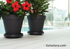 Encuentralas en: http://www.tumatera.co/products/mpa-4034capri/