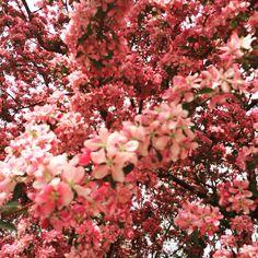 Patio Patio Design, Flower Arrangements, Wedding Flowers, Boutique, Floral, Creative, Florals, Flowers, Floral Arrangement