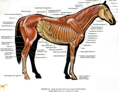 cold backed horse - Google Search