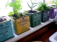 Twinings Tea Tin Windowsill Planters - Items you might otherwise throw away can be useful plant containers instead...