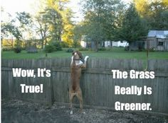 """Marley says, """"The grass really is greener on the other side""""! Funny Animals Talking, Pergola Pictures, Outdoor Garden Furniture, Water Conservation, Pergola Designs, Pool Landscaping, The Other Side, Lawn Care, Green Grass"""