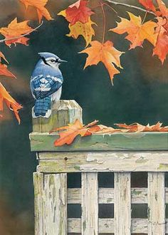 Autumn Splendor-Bluejay