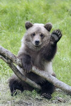 """fridaybear: """" Hey, it's Friday. You have an incredible weekend. """""""
